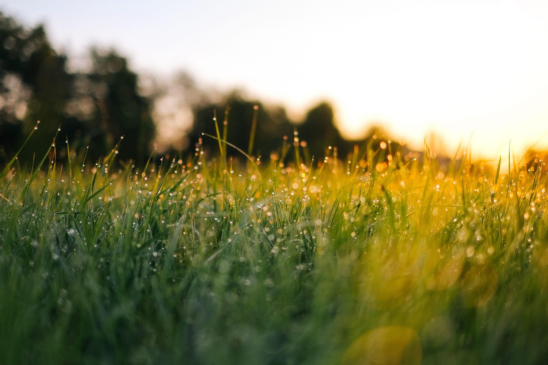 Growing Grass
